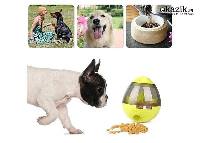 Zabawka jajko dla psa, kota