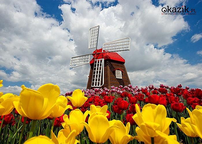 Wycieczka do Holandii na Paradę Kwiatową Express! Opieka pilota! Zwiedzanie wg programu!
