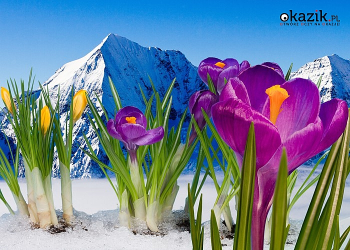 Wiosna w Tatrach! Willa & Karczma Grota Zbójnicka! Gliczarów Górny! Pobyty dla 2 lub 3 osób! Wyżywienie HB!