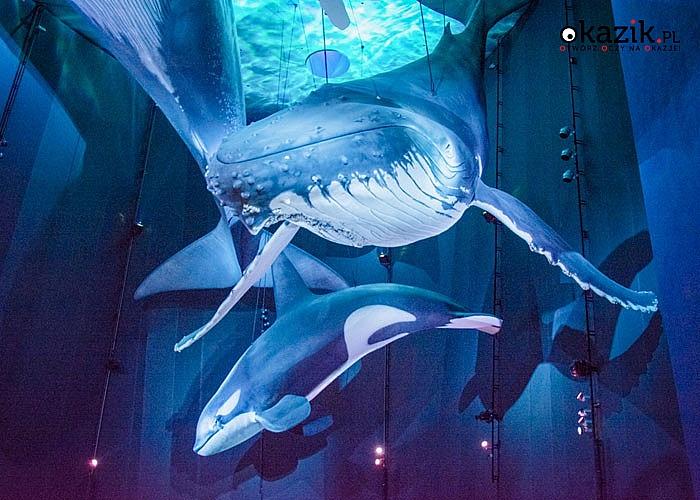 Stralsund - sekrety morskich głębin i jarmarki bożonarodzeniowe! Autokar klasy LUX! Opieka pilota!