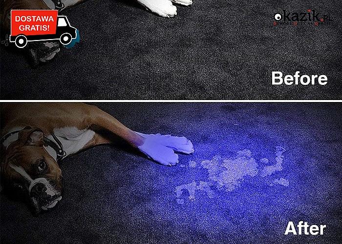 WOW! Latarka UV LED ultrafioletowa – wiele zastosowań!