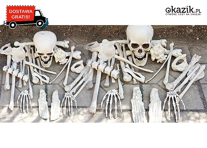 Kościotrup! Doskonałe rekwizyty na Halloween! Zestaw 28 części kości o naturalnej wielkości! (149zł)