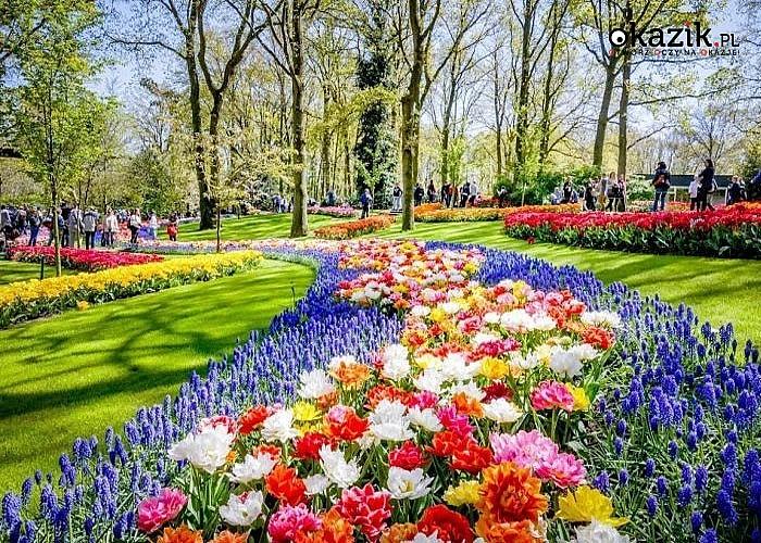 Poczuj wiosnę! Festiwal Tulipanów w Keukenhof! 3 dniowa wycieczka do Holandii połączona ze zwiedzaniem.