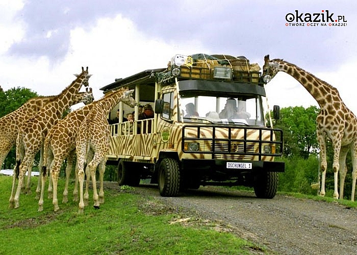 Spędź cudowny dzień w 3 krainach tematycznych! Serengeti Park w Niemczech!