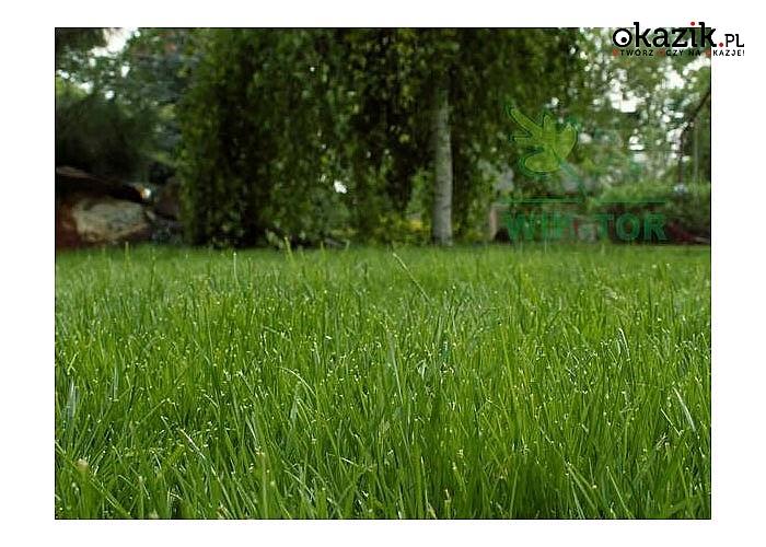 Trawa na macie dla osób wymagających, które pragną mieć piękny, reprezentacyjny trawnik