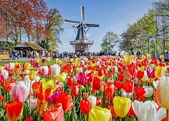 Festiwal Tulipanów w Holandii