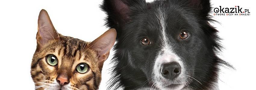 Dla miłośników zwierząt: zadbajmy o naszych braci mniejszych!