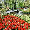 3-dniowa wycieczka Amsterdam i Festiwal Tulipanów dla 1 osoby