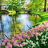 Magiczny Amsterdam i ogród Keukenhof! Wycieczka na Paradę Kwiatów Express