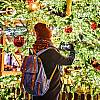 2-dniową wycieczkę na Jarmark Bożonarodzeniowy w Pradze dla 1 osoby